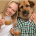 ROOFFEE! Καφές για σκύλους...