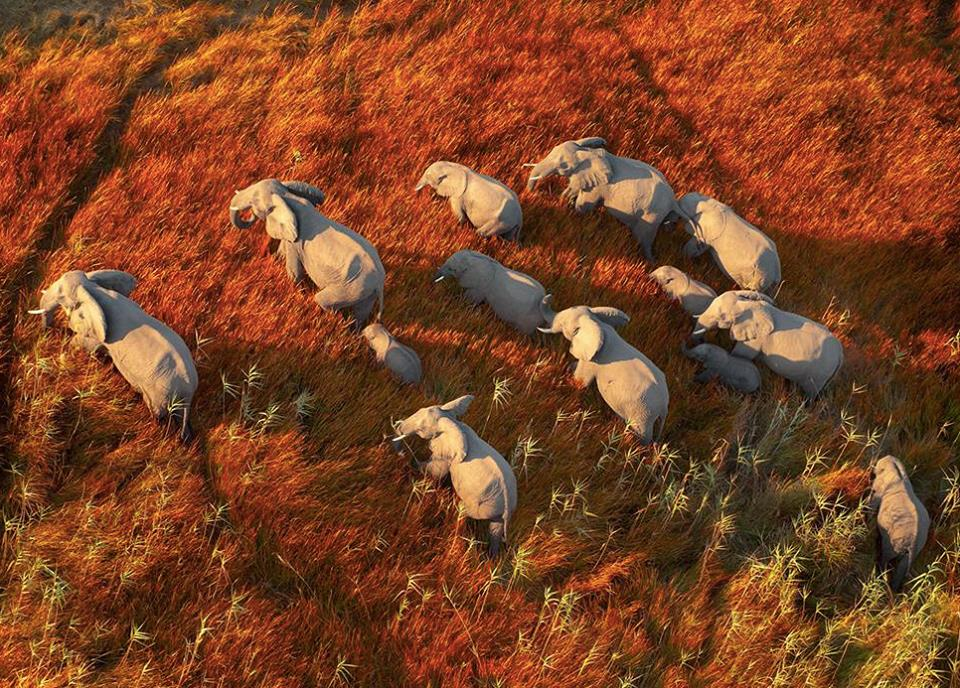 """Elephant Refugees"" New US Documentary Film scoring project"