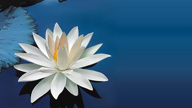 apa de flori