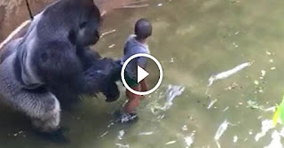 gorilla and the children in the zoo
