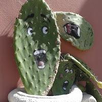 Kaktusgesicht