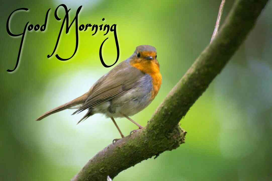 Beautiful Birds Good Morning Images Pics Best Collection