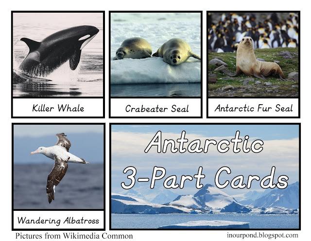 Antarctica Matching Cards for Safari Toob  #howisafari  #Montessori  #continent  #3partcards