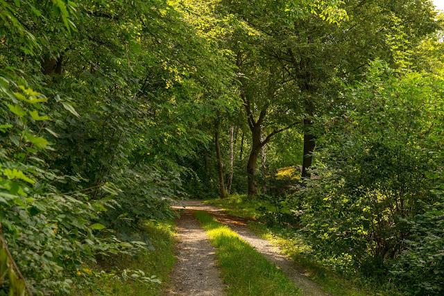 Lokaler Panoramaweg Bad Mergentheim | Wandern Liebliches Taubertal 16