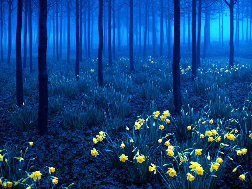 Germany,Black Forest