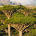 Socotra, Pulau Paling Aneh, Misteri dan Paling Indah Di Dunia,  Tempat  Dajjal Dirantai?
