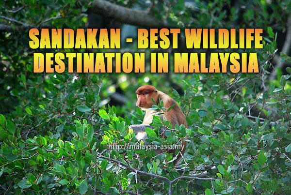Sandakan Best Wildlife Destination in Malaysia
