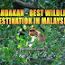 Why Sandakan is the Best Wildlife Destination in Malaysia?