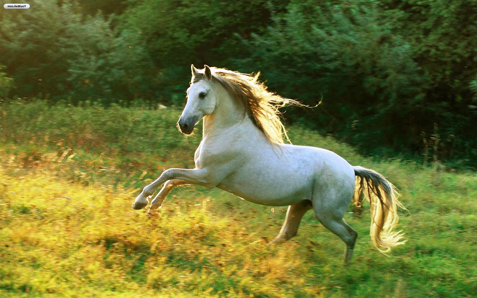 Fantastic   Wallpaper Horse Ultra Hd - White-Horse-jump-images-HD-Wallpapers  Trends_6610082.jpg