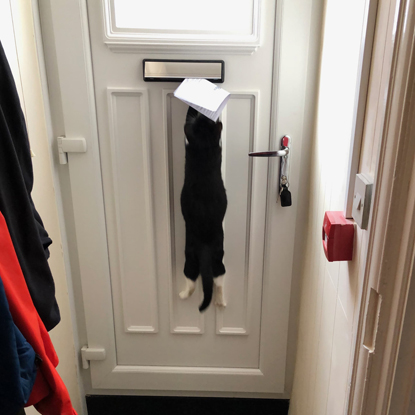 black and white cat clinging to the letterbox in the door