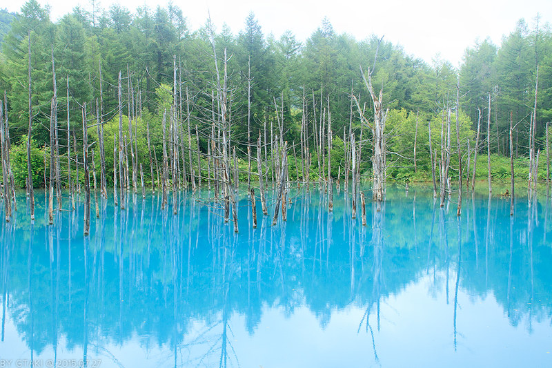 blue pond, hokkaido blue pond, blue pond hokkaido, shirogane blue pond, blue pond biei, biei blue pond, blue pond of hokkaido, blue lake hokkaido, the blue pond of hokkaido, furano hokkaido japan blue pond, blue pond hokkaido winter