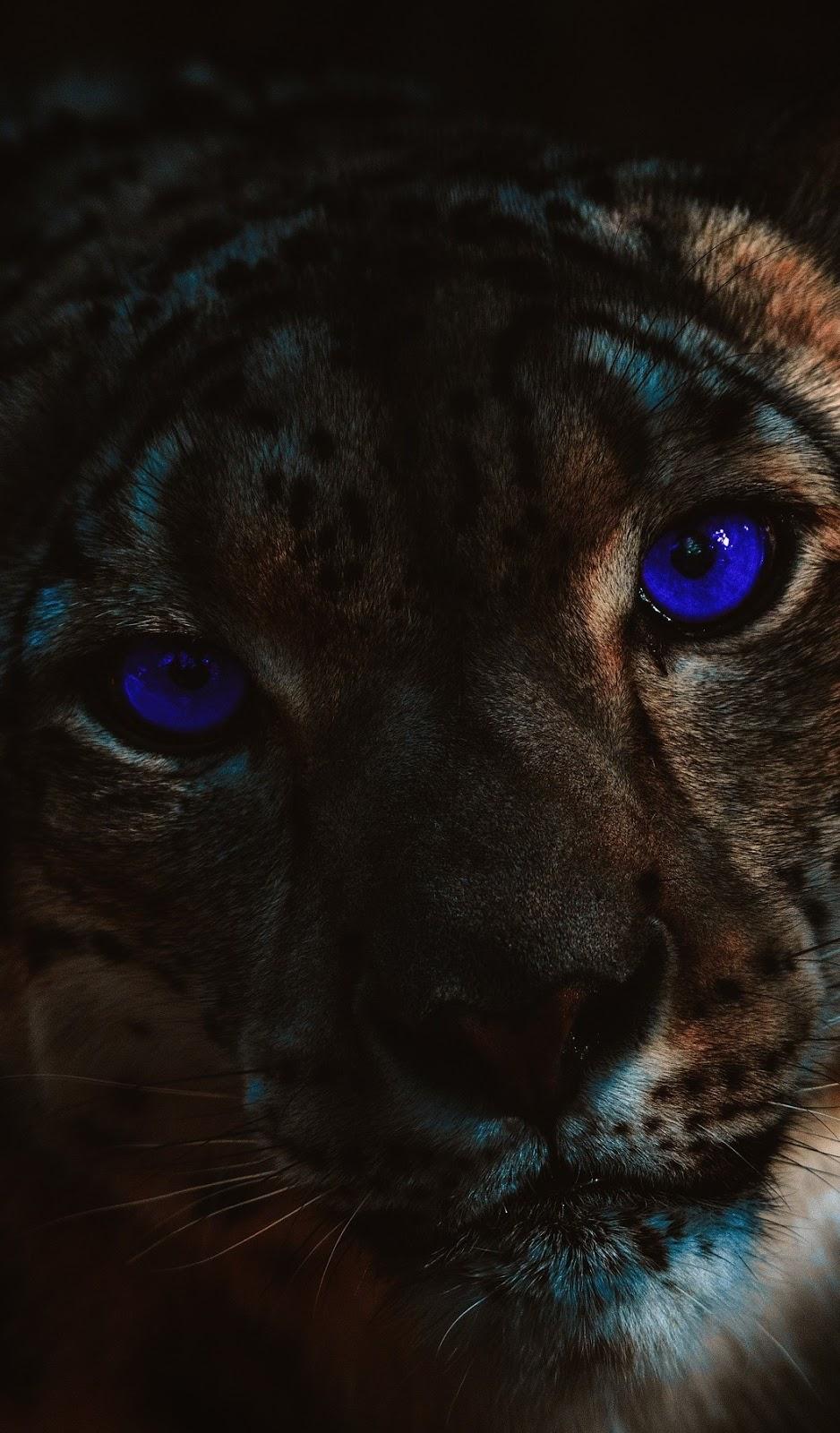 Blue eyed tiger.