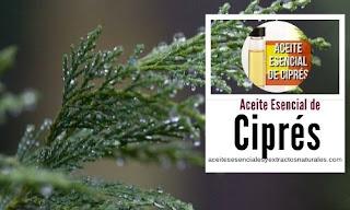Aceite esencial de Ciprés en listado de aceites y esencias para Aromaterapia