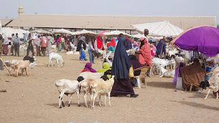 Walks through the Somaliland Camel Market