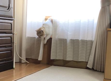 外を見るのに飽きた猫