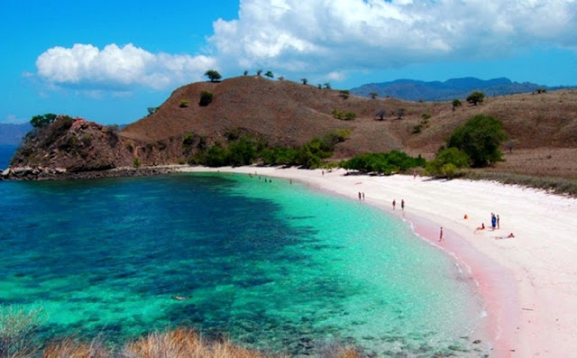 The Uniqueness of the Beach Pink Lombok