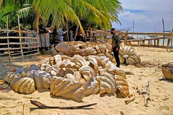 Philippine Coast Guard seizes 200 tons of giant fossilized clam shells|interesting news of the day|