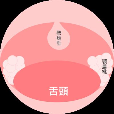顎扁桃體-劉奕醫師繪製