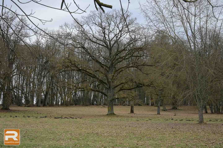 Mežotnes pils parks - 3