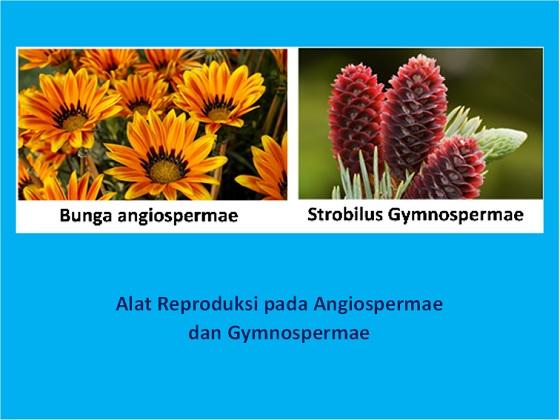bunga dan strobilus