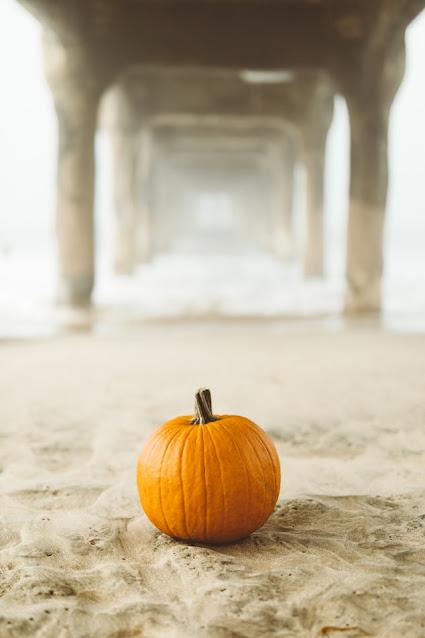 A lone pumpkin stands alone