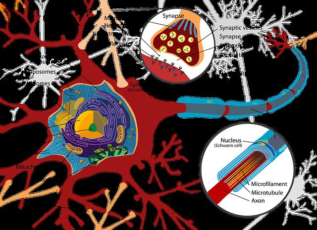 nervous system neuron brain madhyamik 2022 wbbse