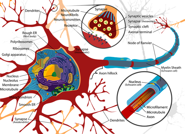 Interesting Facts About Your Nervous System | Know Your Nervous System | Neuron & Brain | Life Science | WBBSE