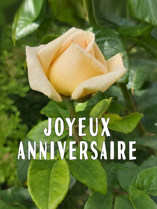 rose jaune, carte de voeux d'anniversaire