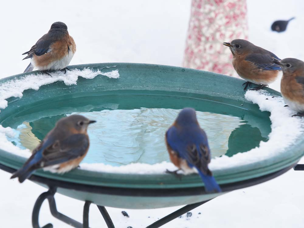 Bluebird hot tub party