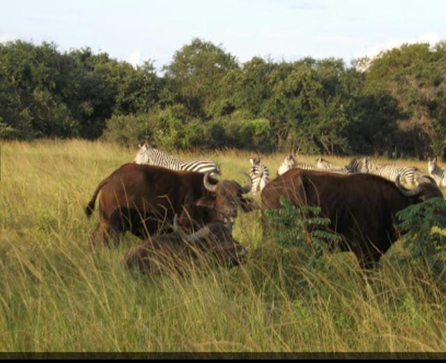 """Alt: = """"photo showing parays game ranch, Lusaka"""""""