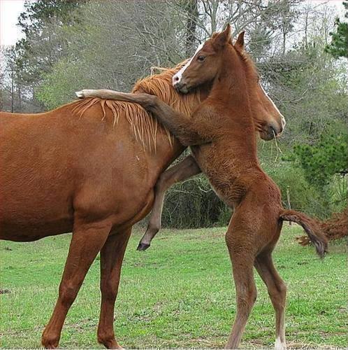 foto amor entre caballos, yegua y potro amor