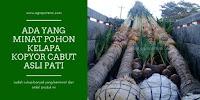 Dan Pak Robby [Jakarta] Pun Memilih Kelapa Genjah Kopyor Cabut