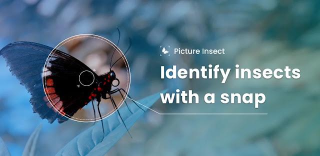 تحميل برنامج Picture Insect -Bug Identifier  - برنامج كشف الحشرات للأندرويد
