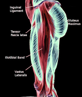 Iliotibial band. Image courtesy S Bhimji MD  From: Anatomy, Bony Pelvis and Lower Limb, Iliotibial Band (Tract)  Copyright © 2021, StatPearls Publishing LLC. This book is distributed under the terms of the Creative Commons Attribution 4.0 International License (http://creativecommons.org/licenses/by/4.0/), which permits use, duplication, adaptation, distribution, and reproduction in any medium or format, as long as you give appropriate credit to the original author(s) and the source, a link is provided to the Creative Commons license, and any changes made are indicated.