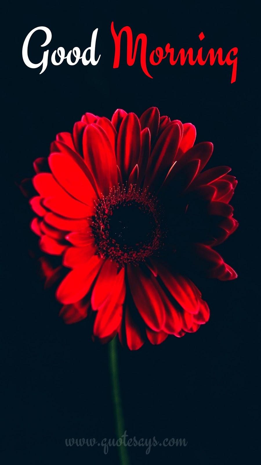 Good Morning Red Flower
