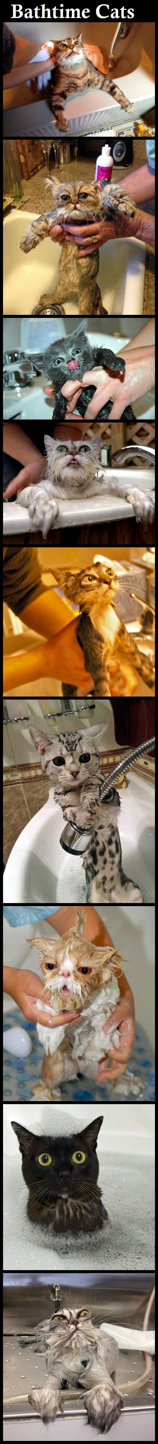 Funny Unhappy Bathtime Cats Photo Strip