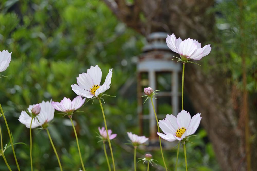 Sorteo de verano, consigue una prensa de flores portátil y mi Guía de Plantas!