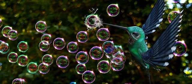 soap bubbles and hummingbird