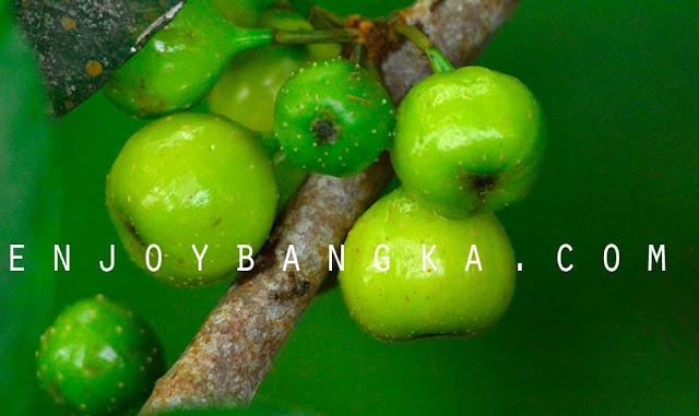 buah khas hutan bangka belitung