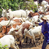 How I Stopped Herdsmen From Entering My Community —  Monarch