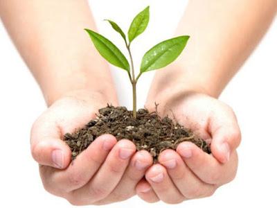 Corredor verde para polinizadores do IB é o local escolhido por São Paulo para a realização do 2º Plantio Global