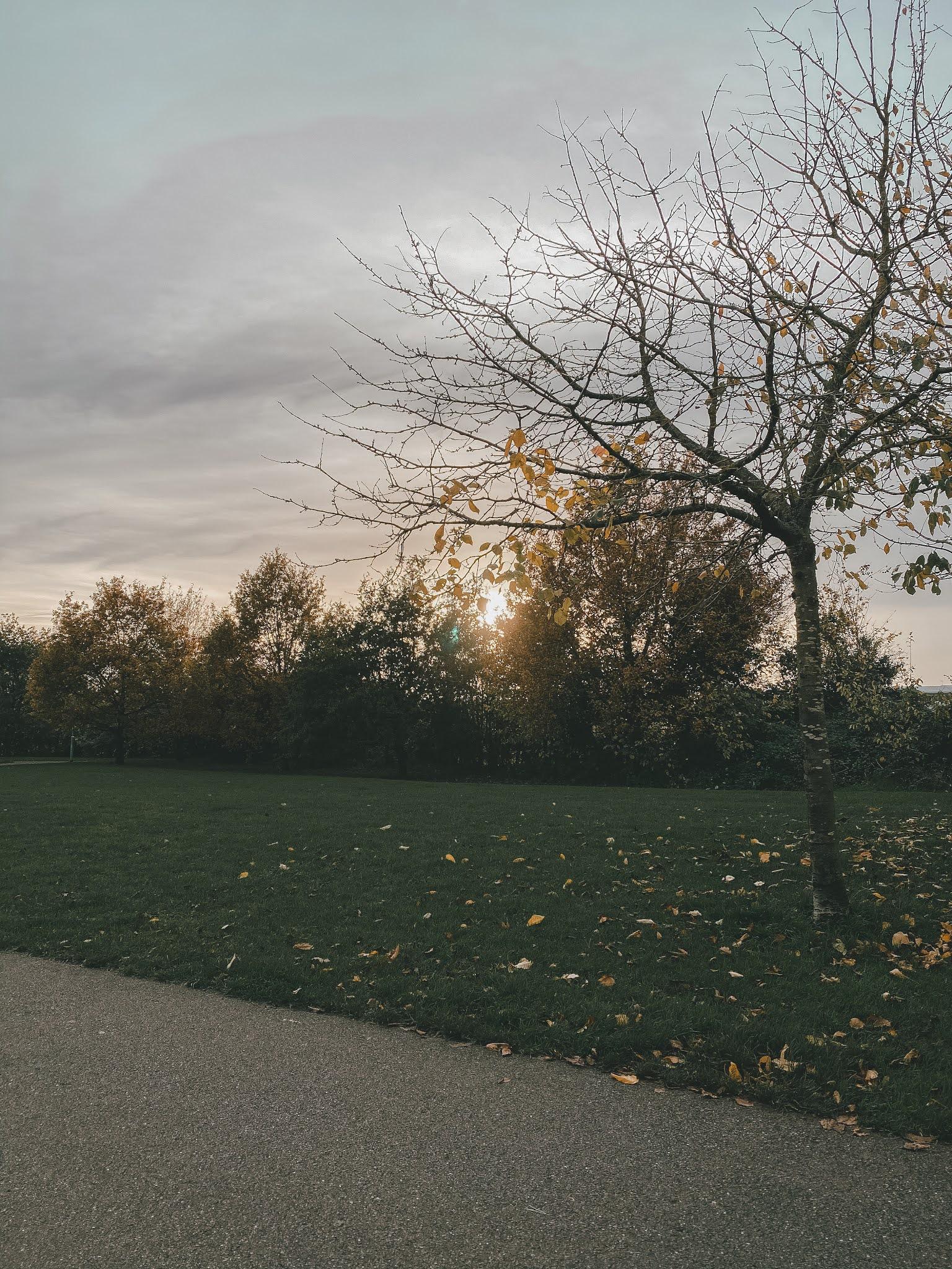 Autumn photo diary
