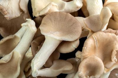 Scope of Mushroom Business in Manipur