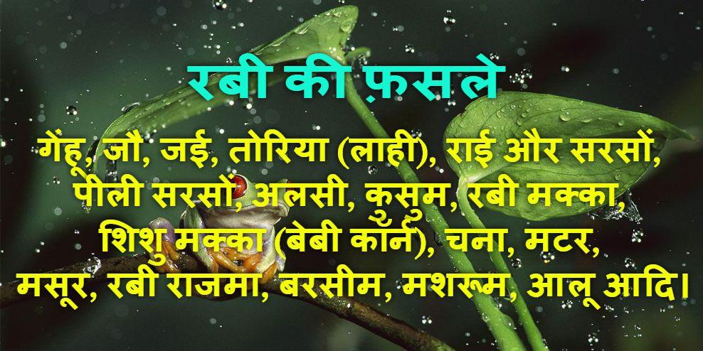 Ravi Ki Fasal: Ravi Crops