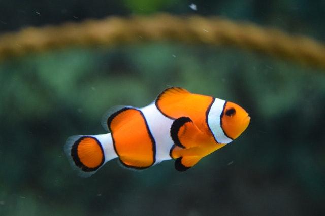 belajar dari ikan