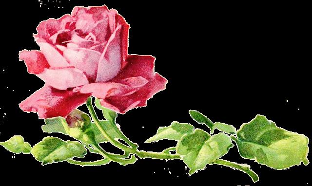Image ancienne rose, format png pour scrap digital