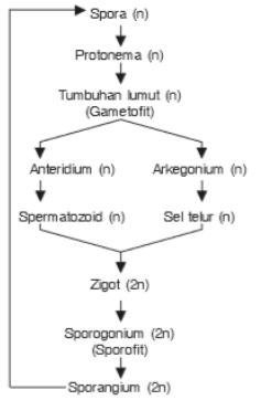 KELAS BIOLOGI 10: Klasifikasi Tumbuhan ( Plantae )
