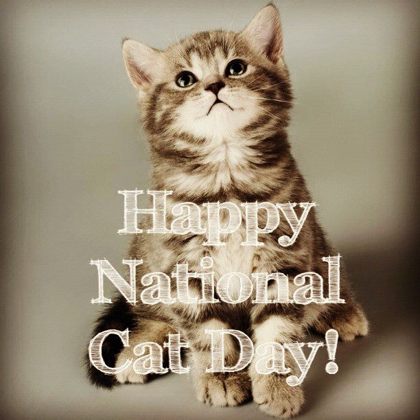National Cat Day Wishes Images