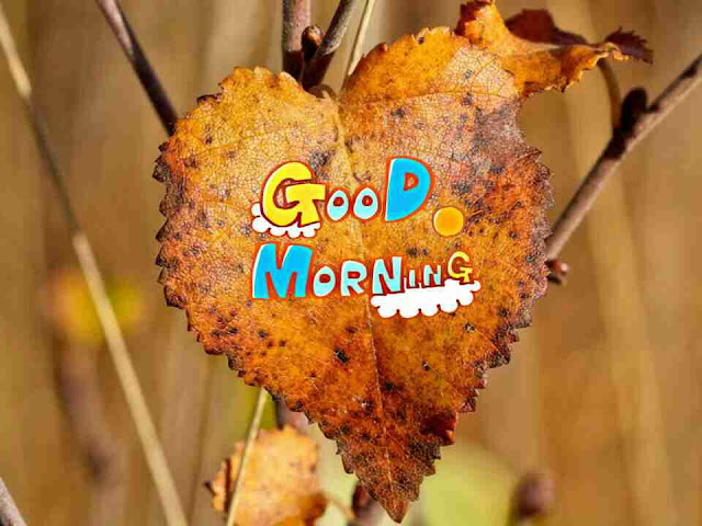 beautiful good morning image heart shape leaf for her