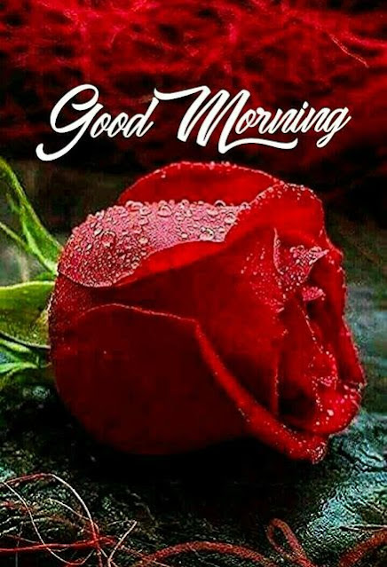 good morning quotes for love , good morning quotes in hindi with images